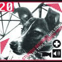Various Artists: Stupido 20 (CD)